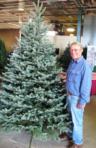 Transplant source is Berkey's Nursery 620 Colorado Blue Spruce